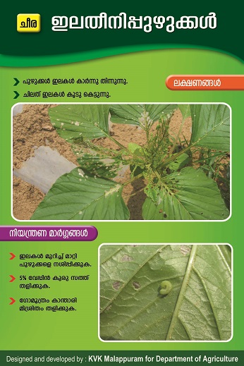 Amaranthu Leaf Eating Caterpiller Poster copy