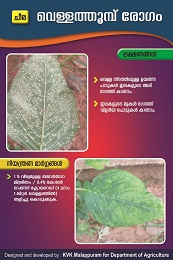 Amaranthus White Rust Poster copy
