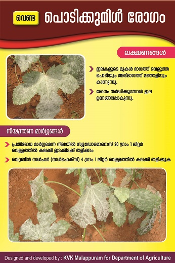 Bhindi Powdery Mildew copy