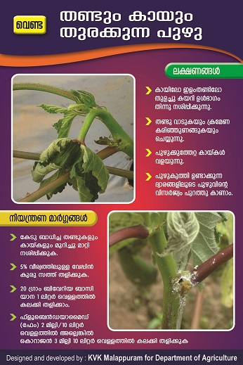 Bhindi fruit and shoot borer poster copy