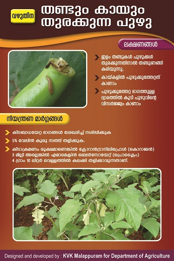 Brinjal Fruit and Shoot borer poster copy