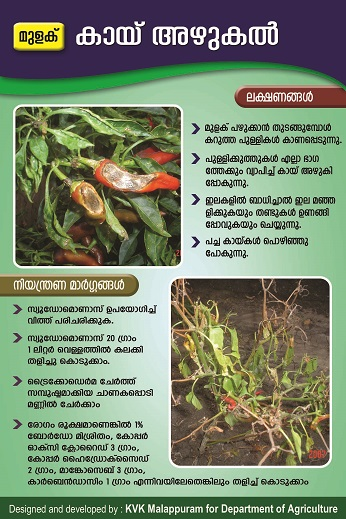 Chilli anthracnose poster copy