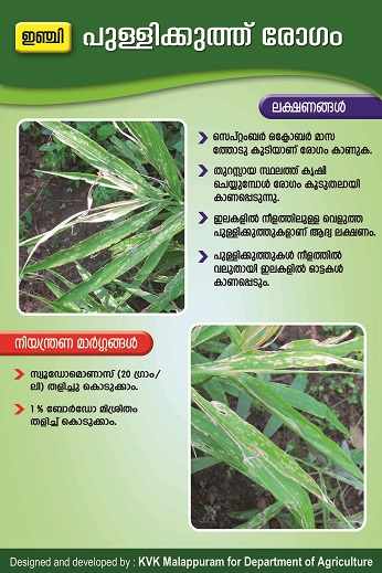 Ginger Leaf Spot poster copy