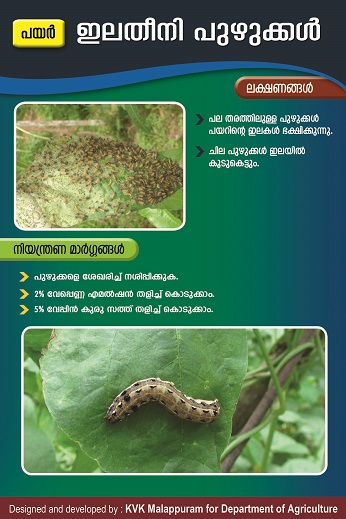 Leaf eating caterpillar poster copy (2)