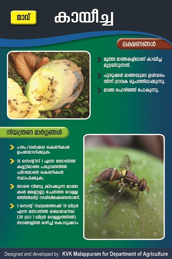 Mango Fruit fly poster copy
