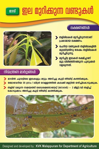 Mango leaf cutting weevil poster copy