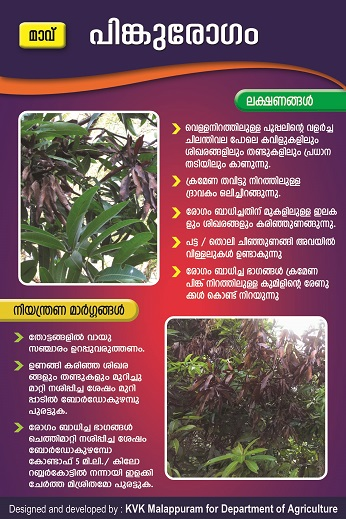 Mango pink disease poster copy