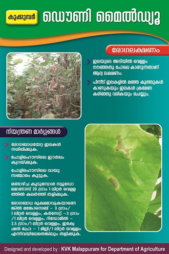 Polyhouse downy mildew poster copy